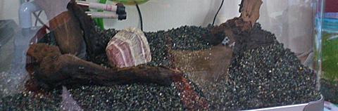 大磯砂の適切な量と洗い方とセッティングの方法